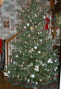 christmas tree cannan